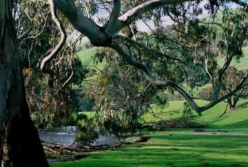 Elm Cottage (Tumut - Australia)